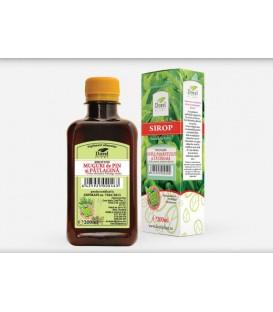 Sirop Muguri de Pin & Patlagina, 500 ml