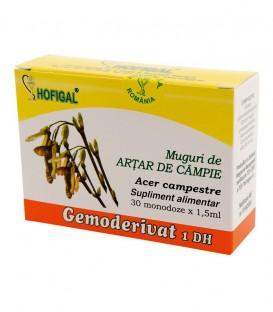 Gemoderivat de artar de campie - muguri, 30 monodoze
