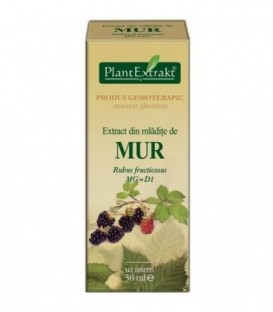 Extract din mladite de mur, 50 ml