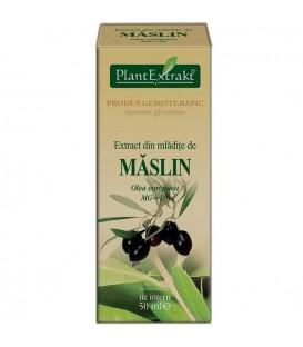 Extract din mladite de maslin, 50 ml
