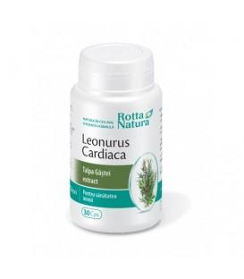 Extract de talpa gastei (Leonorus Cardiaca), 30 capsule
